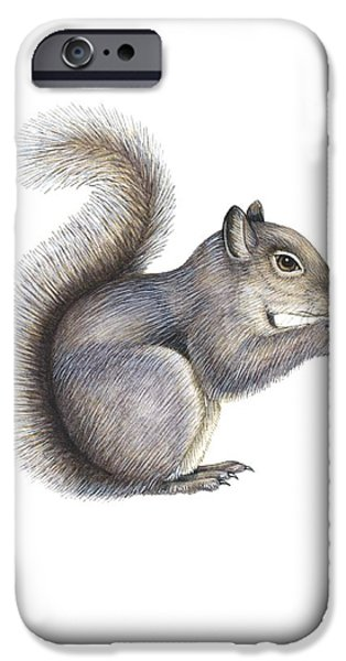 Cut-outs iPhone Cases - Eastern Grey Squirrel, Artwork iPhone Case by Lizzie Harper
