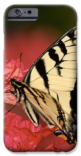 Eastern Yellow Tiger Swallowtail And Azaleas iPhone Case by Lara Ellis