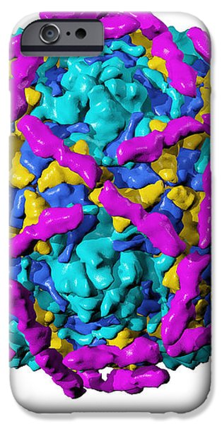 Echovirus Type 12 Particle iPhone Case by Laguna Design