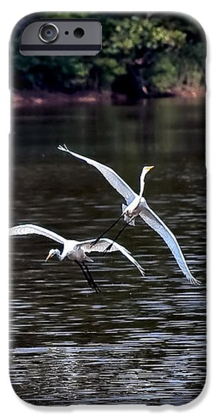 Egrets V iPhone Case by Gary Adkins