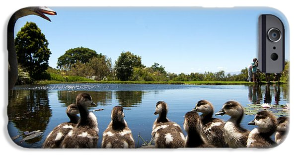 Cape Town iPhone Cases - Egyptian geese iPhone Case by Fabrizio Troiani