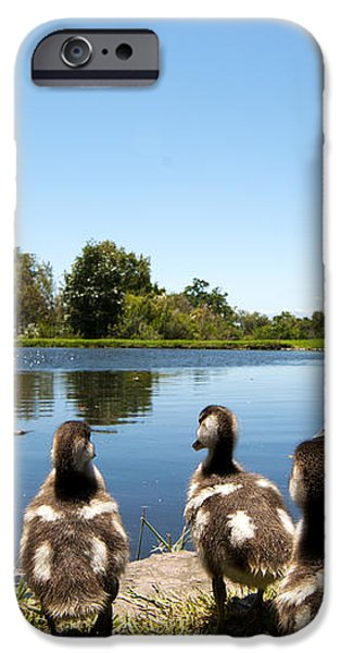 Egyptian geese iPhone Case by Fabrizio Troiani
