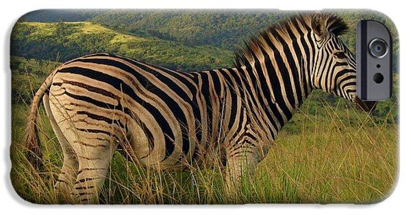 Wildlife Imagery iPhone Cases - Elegance iPhone Case by Ramona Johnston