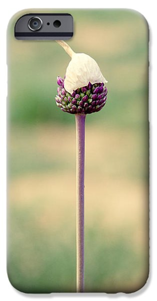 Alliums iPhone Cases - Elegance iPhone Case by Stylianos Kleanthous