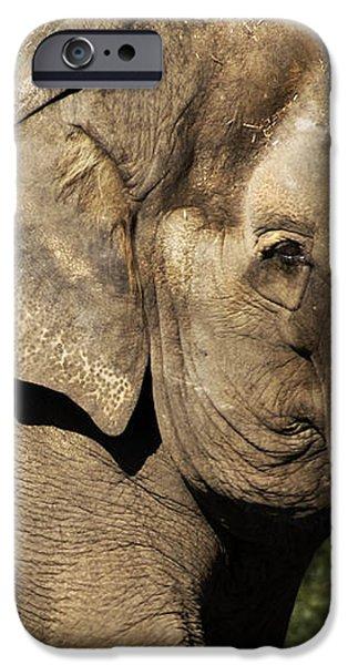 elephant iPhone Case by Anthony Citro