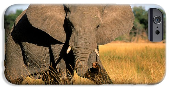 Elephant iPhone Cases - Elephant iPhone Case by Gregory G Dimijian and Photo Researchers