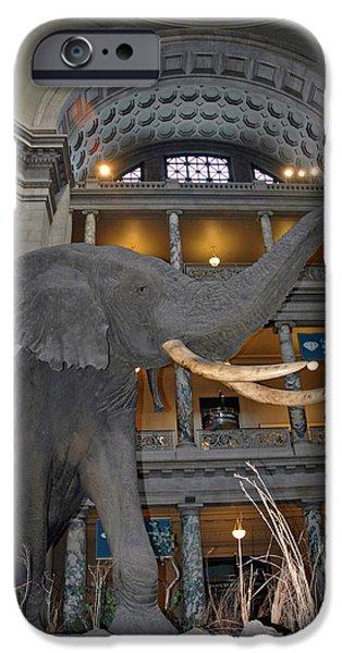Smithsonian Museum iPhone Cases - Elephant in the room iPhone Case by LeeAnn McLaneGoetz McLaneGoetzStudioLLCcom