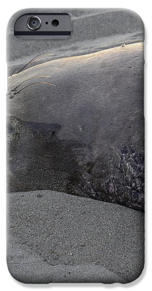 Elephant Seal 5 iPhone Case by Bob Christopher