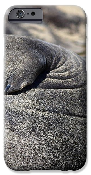 Elephant Seal Fin Nails . 7D16083 iPhone Case by Wingsdomain Art and Photography