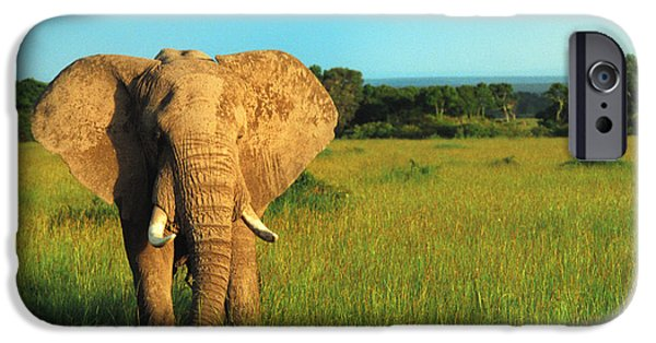 Adventure iPhone Cases - Elephant iPhone Case by Sebastian Musial