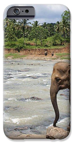 Elephants iPhone Case by Jane Rix