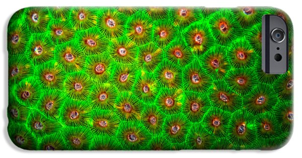Emerald Green iPhone Cases - Emerald Coral iPhone Case by Doug Sturgess