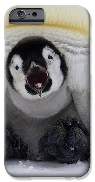 Emperor Penguin Aptenodytes Forsteri iPhone Case by Rob Reijnen
