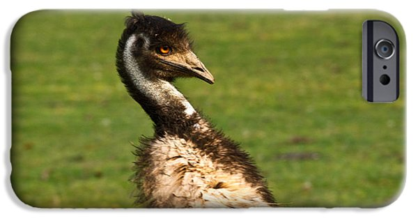 Emu iPhone Cases - Emu Glaring Stare iPhone Case by Douglas Barnett