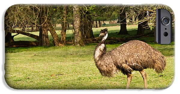 Emu iPhone Cases - Emu Out Walking iPhone Case by Douglas Barnett