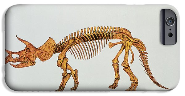 Triceratops iPhone Cases - Enhanced Image Of A Triceratops Dinosaur Skeleton iPhone Case by Mehau Kulyk