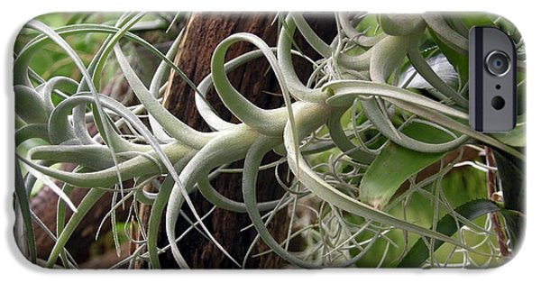 Bromeliad iPhone Cases - Epiphytic Bromeliad iPhone Case by Tony Craddock