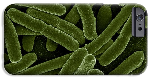Microbiology Photographs iPhone Cases - Escherichia Coli Bacteria, Sem iPhone Case by Science Source
