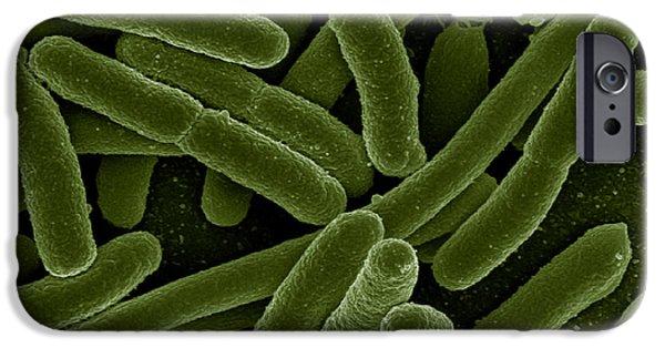 Prokaryote iPhone Cases - Escherichia Coli Bacteria, Sem iPhone Case by Science Source
