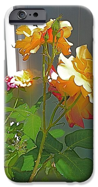 John Stewart iPhone Cases - Essence of Delicacy iPhone Case by John Norman Stewart