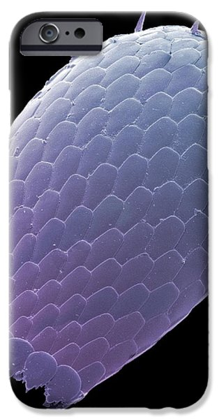 Euglypha Amoeba Shell, Sem iPhone Case by Steve Gschmeissner