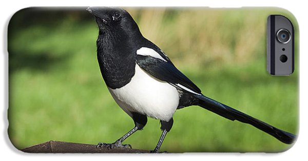 Magpies iPhone Cases - European Magpie iPhone Case by Georgette Douwma