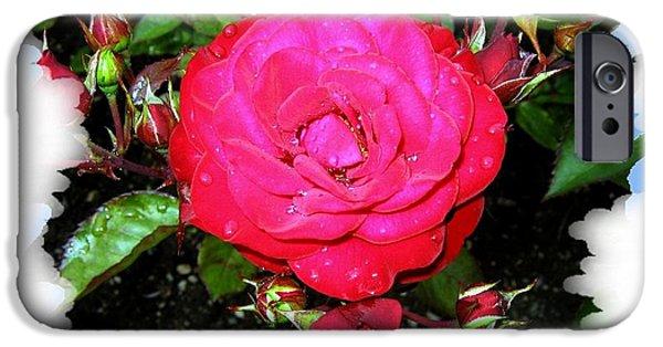 Floribunda iPhone Cases - Europeana Roses And Raindrops iPhone Case by Will Borden