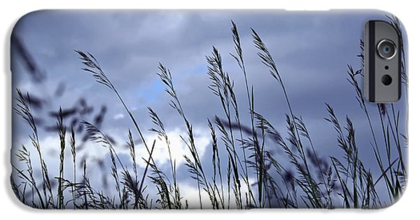 Meadow Photographs iPhone Cases - Evening grass iPhone Case by Elena Elisseeva