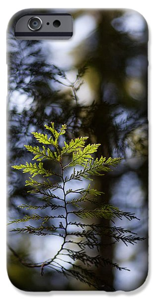 Forest Detail iPhone Cases - Evergreen Light iPhone Case by Mike Reid