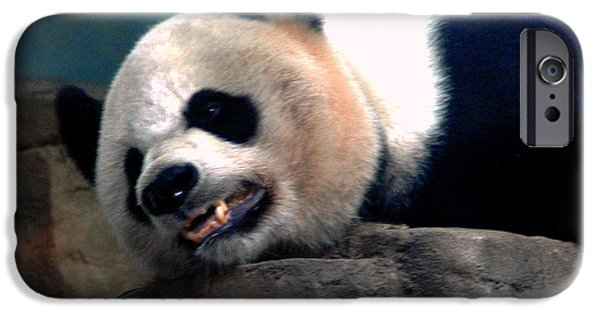 Smithsonian iPhone Cases - Exhausted Panda iPhone Case by LeeAnn McLaneGoetz McLaneGoetzStudioLLCcom