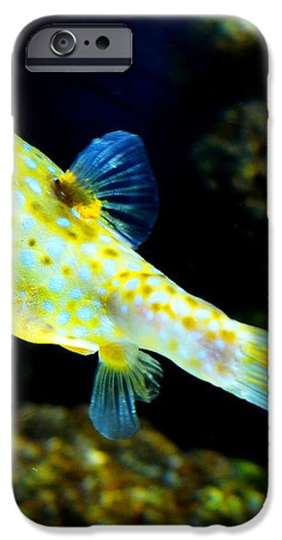 Exotic Fish iPhone Case by Pravine Chester