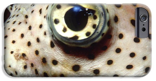 Porcupine Fish iPhone Cases - Extreme Close-up Of A Pufferfish Eye iPhone Case by Beverly Factor