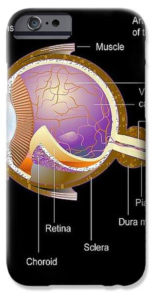 Eye Anatomy,artwork iPhone Case by Francis Leroy, Biocosmos