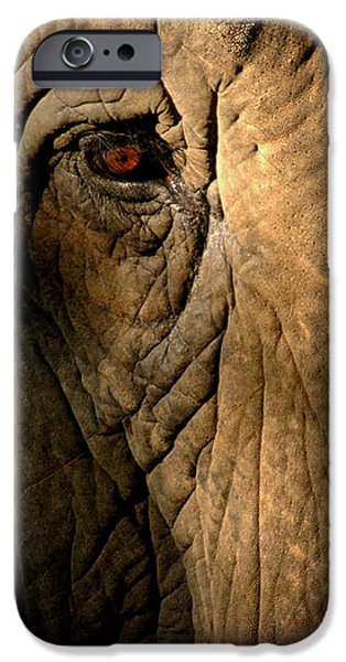 Elephants iPhone Cases - Eye of the Elephant iPhone Case by Greg and Chrystal Mimbs