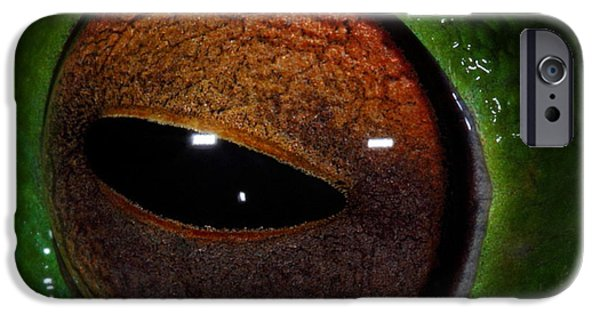 Frogs Photographs iPhone Cases - Eye Of The Frog iPhone Case by Bruce J Robinson