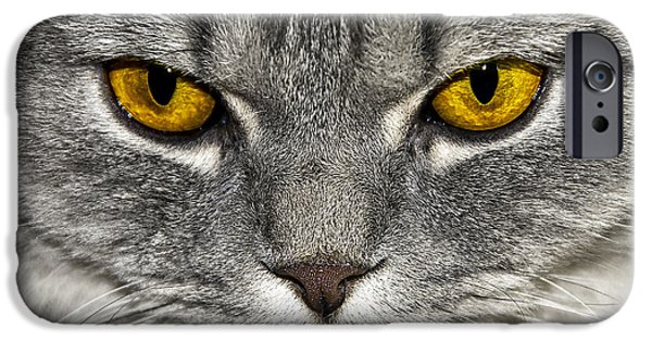 Animal Cards iPhone Cases - Eyes iPhone Case by Svetlana Sewell