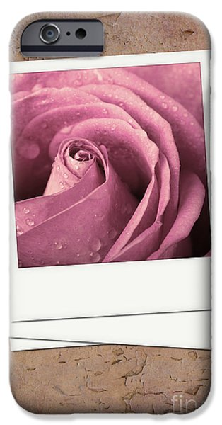 Faded rose photo iPhone Case by Jane Rix