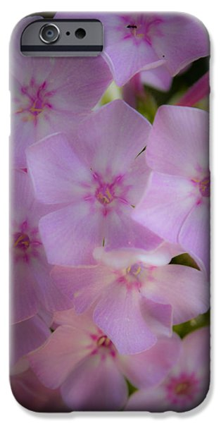 Phlox iPhone Cases - Fairy Tale Phlox iPhone Case by Teresa Mucha