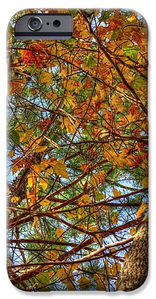 Fall Canopy iPhone Case by Barry Jones
