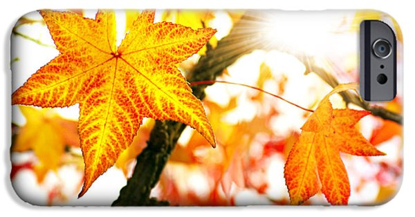 Autumn iPhone Cases - Fall Colors iPhone Case by Carlos Caetano
