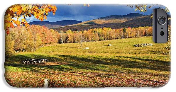 Sutton iPhone Cases - Fall Colours, Cows In Field And Mont iPhone Case by Yves Marcoux