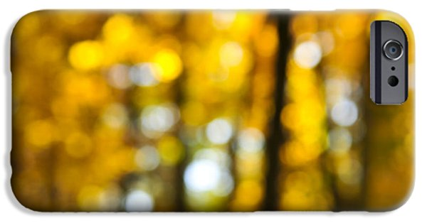 Botanical Photographs iPhone Cases - Fall forest in sunshine iPhone Case by Elena Elisseeva