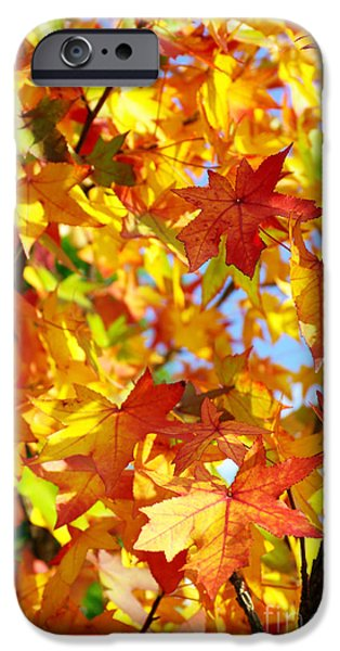 Botanical Photographs iPhone Cases - Fall Leaves Background iPhone Case by Carlos Caetano
