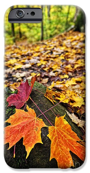 Fallen Leaf iPhone Cases - Fall leaves in forest iPhone Case by Elena Elisseeva