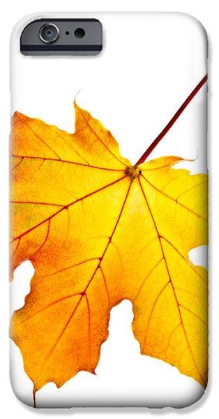 Fall maple leaf iPhone Case by Elena Elisseeva