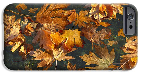 Autumn Leaf On Water iPhone Cases - Fall Maple Leaves on Water iPhone Case by Sharon  Talson