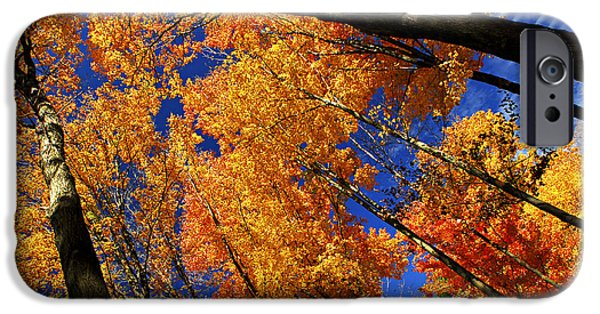 Autumn iPhone Cases - Fall maple treetops iPhone Case by Elena Elisseeva