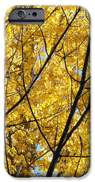 Fall Trees art prints Yellow Autumn Leaves iPhone Case by Baslee Troutman Fine Art Photography