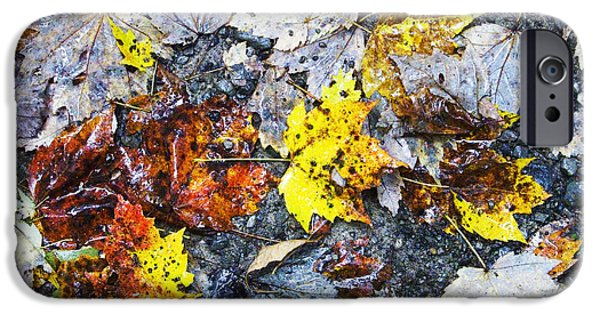 Rainy Day iPhone Cases - Fallen Leaves Rainy Day iPhone Case by Thomas R Fletcher