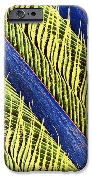 Magpies iPhone Cases - False-colour Sem Of A Magpies Feather iPhone Case by Dr Jeremy Burgess
